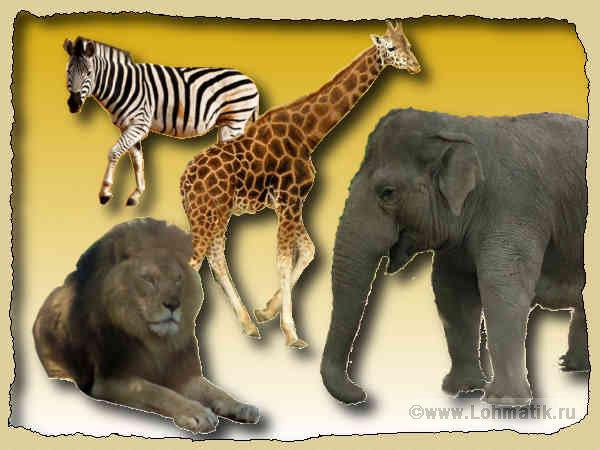 Животных обитающих в африке назови